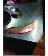 真相曝光!100万的金龙鱼被清