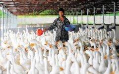 2020年养殖业什么最赚钱农村