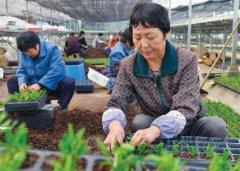 投资什么赚钱现在绿色食品加盟日挣1000