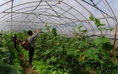 农村创业点子有什么创业