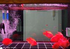 养鹦鹉鱼多少条最旺财呢?