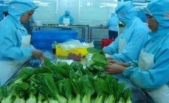 创业小项目农村加工厂创业项