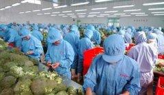 创业找项目30个农村办厂项目 30个农村办厂加工好