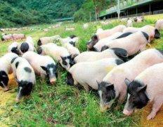 创业小项目在农村养啥赚钱 在农村养殖什么月入